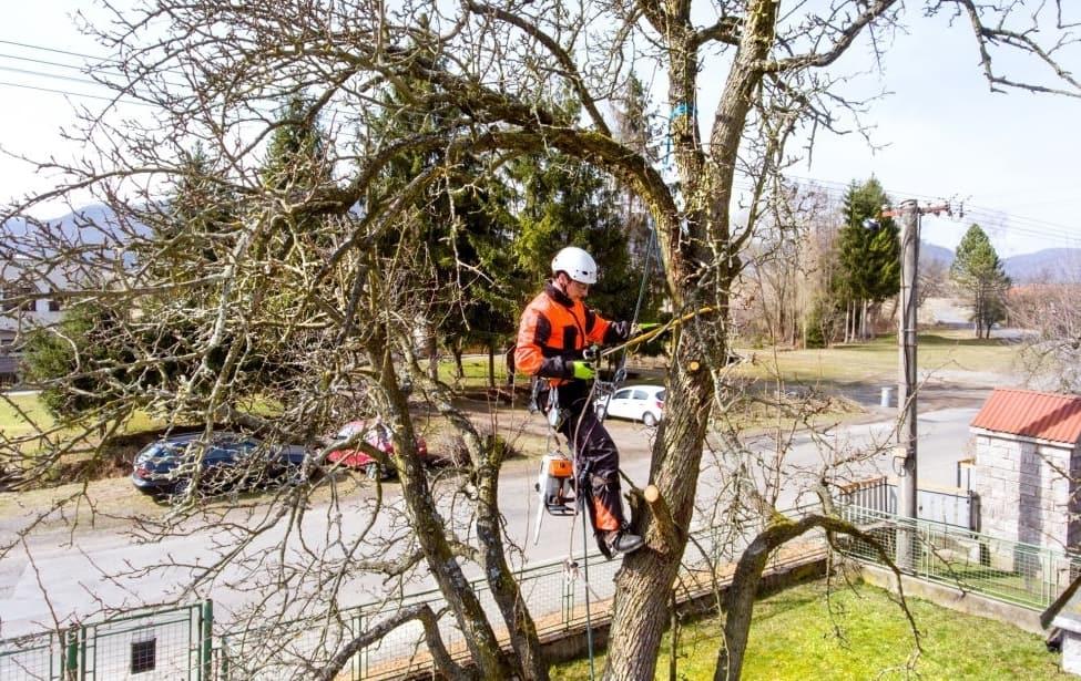 5 Reasons You Need An Arborist