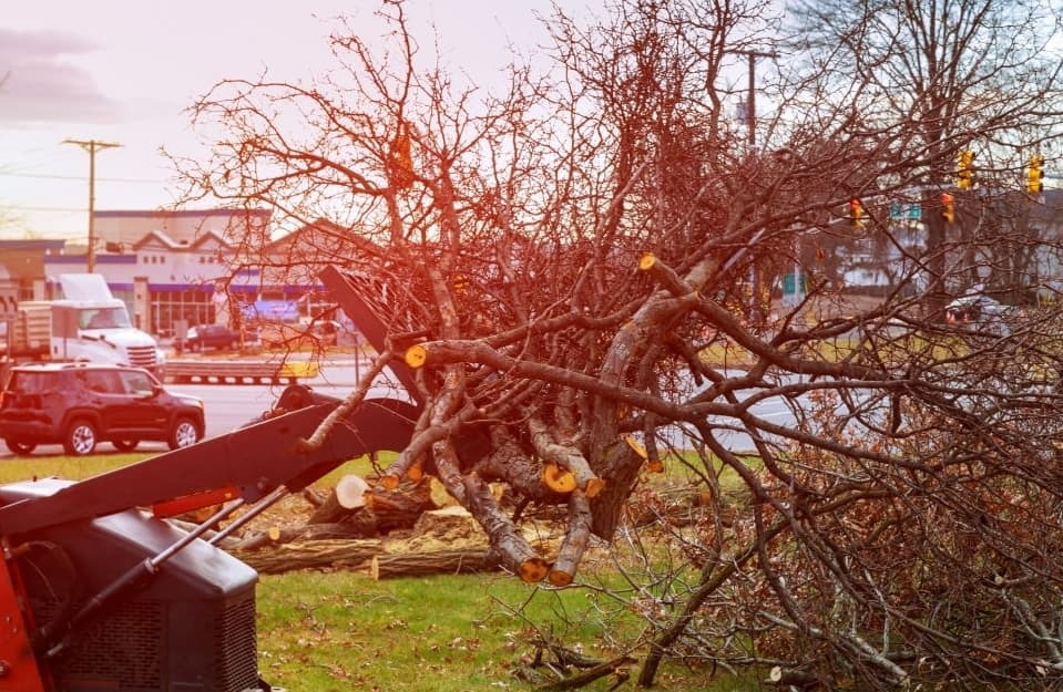 Recognizing When Your Tree May Be At Risk Of Damaging The Property Or Even Injuring People